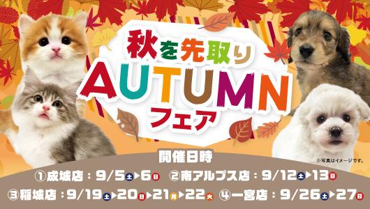 秋を先取り AUTUMNフェア開催