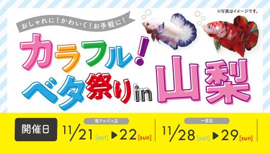 カラフル!ベタ祭りin山梨!開催!