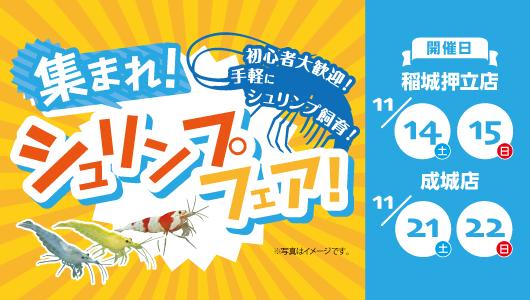 シュリンプ祭り開催in稲城押立店・成城店