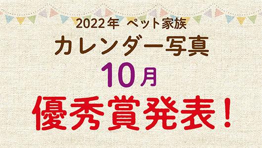 2022年ペット家族カレンダー11月優秀賞発表!