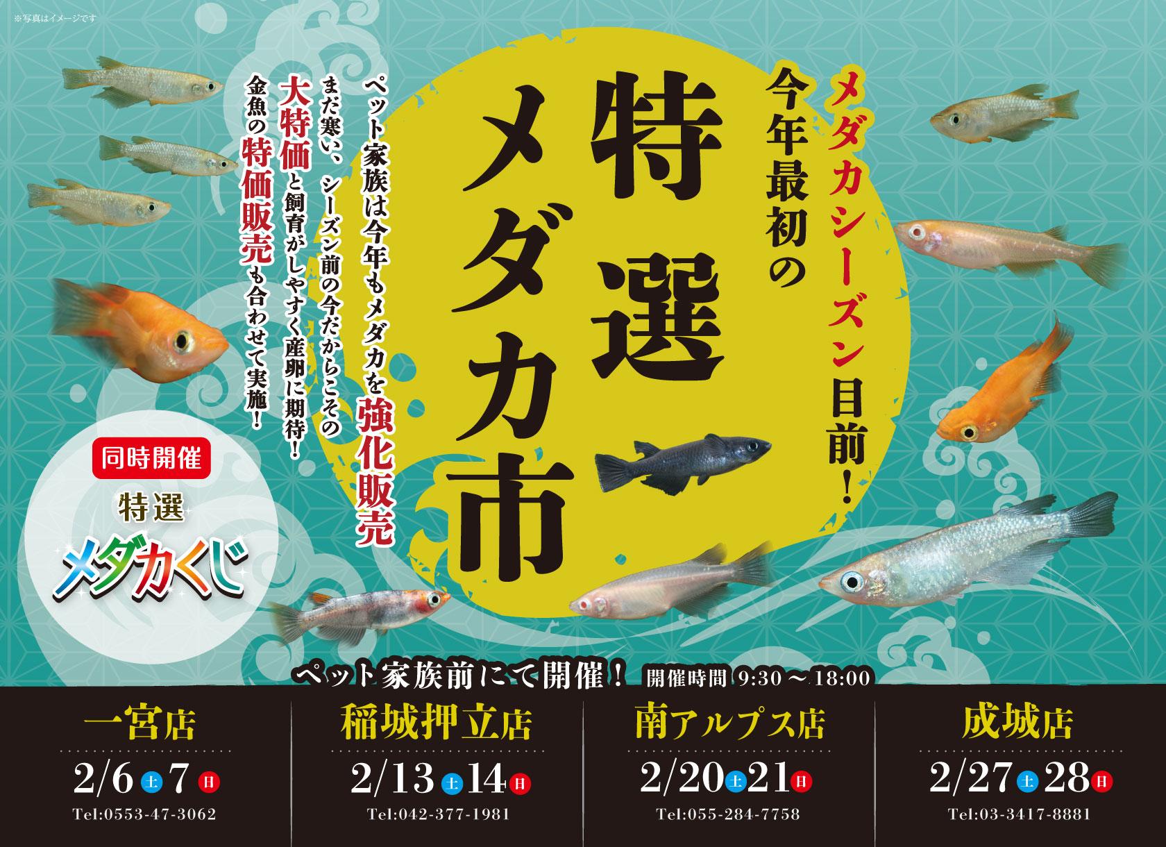 """今年最初の""""特選メダカ市""""!"""