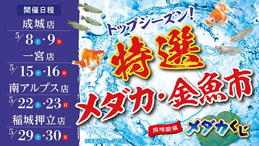 トップシーズン!特選メダカ・金魚市!