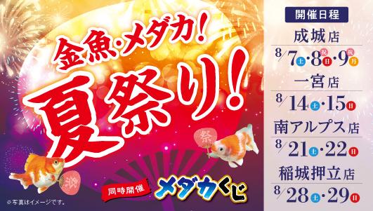 金魚・メダカ!夏祭り!