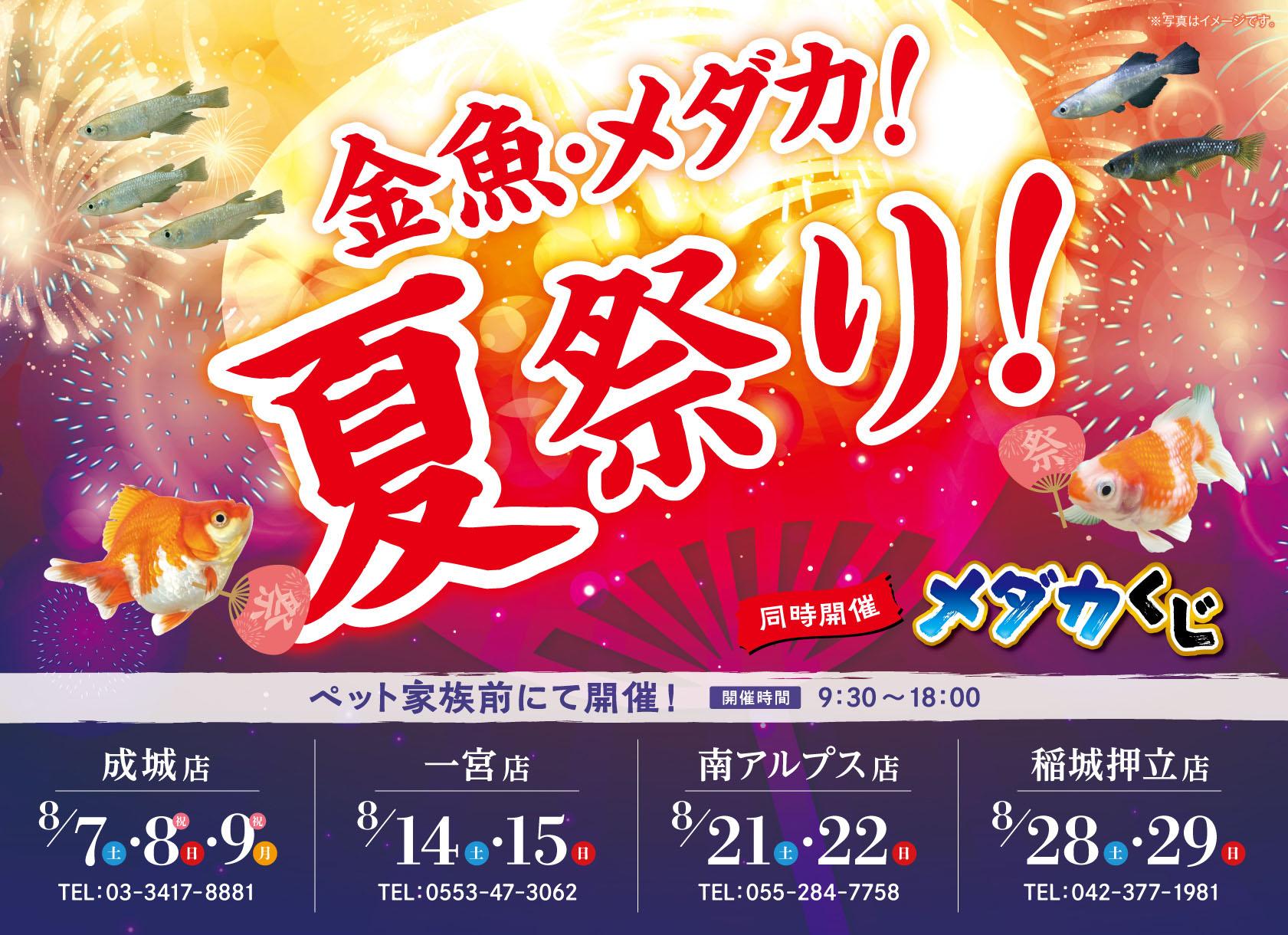 金魚・メダカ!夏祭り!開催!