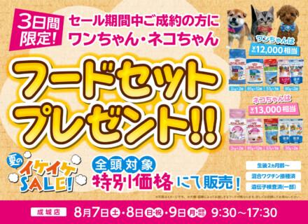 夏のイケイケセール開催!フードセットプレゼント!